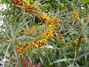 Orange farbene Früchte